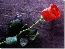 True_Love_Forever