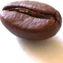 biji kopi pilihan, samarkan bau diare